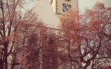 Kácet či nekácet? Lípy na soběslavském náměstí se potkají s pilou