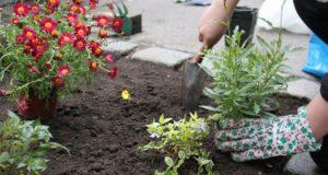 Parklety, street gardening, guerilla gardening